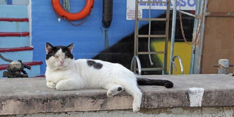 «Непотопляемый Сэм»: а был ли котик?