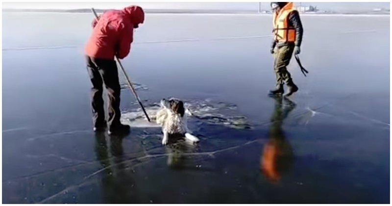 Спасатели освободили собаку, вмерзшую в лед