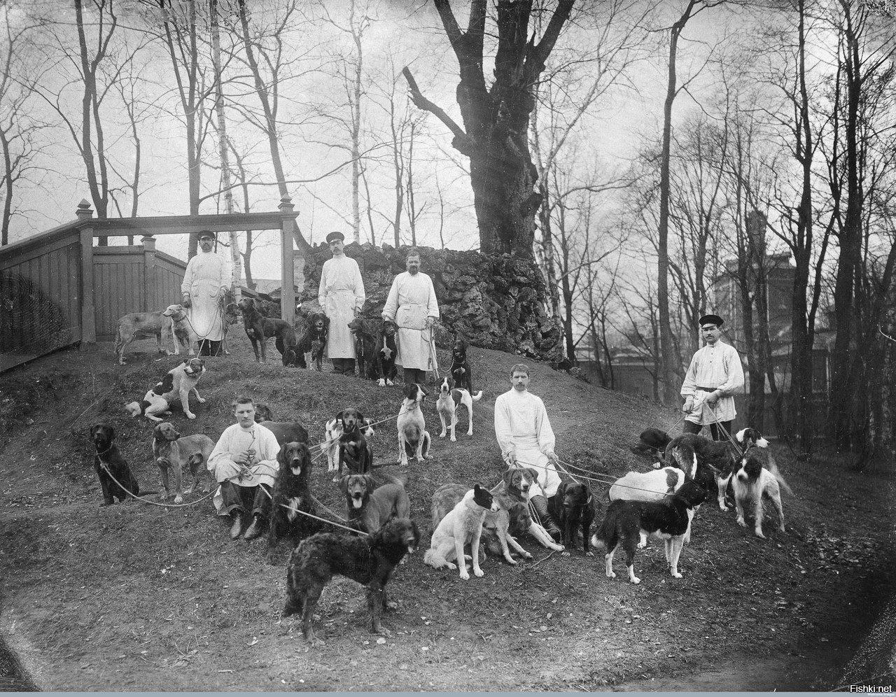 Сотрудники института экспериментальной медицины выгуливают собак доктора Павлова