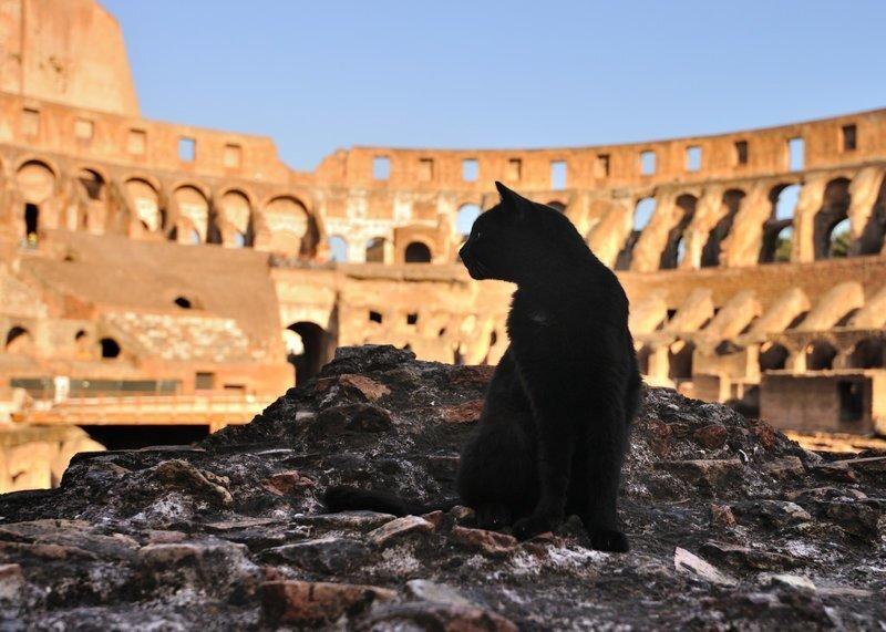 Самые кошачьи города мира: Рим