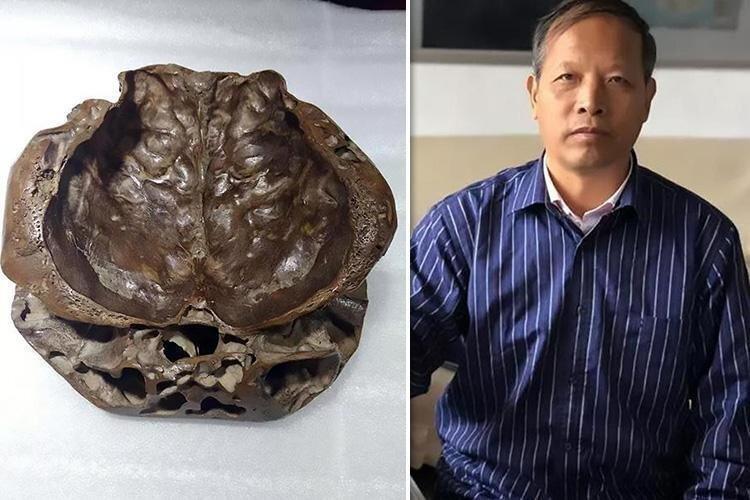 Охотник за НЛО показал фото «реального черепа пришельцев»