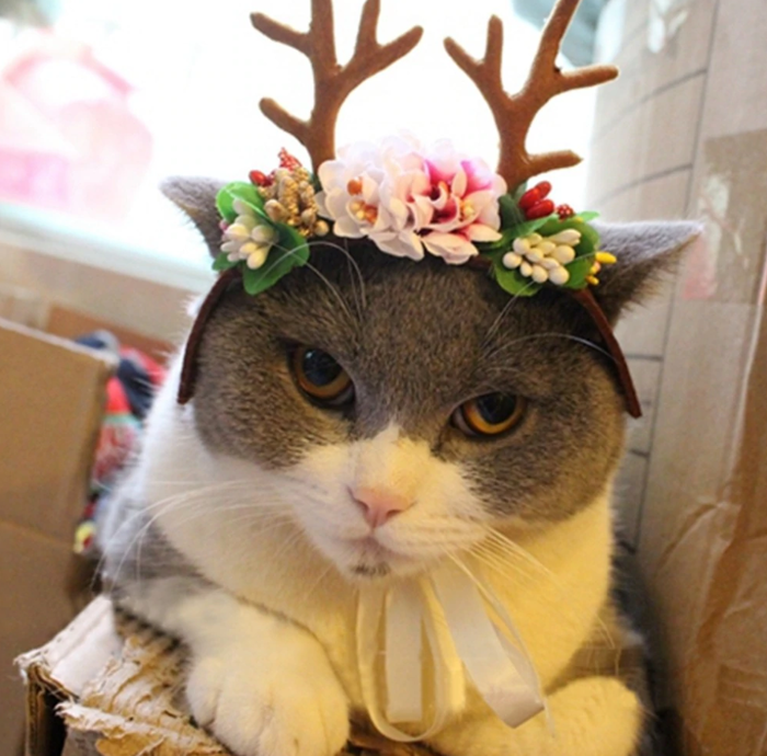 Что точно не стоит дарить вашему Коту на новый год?