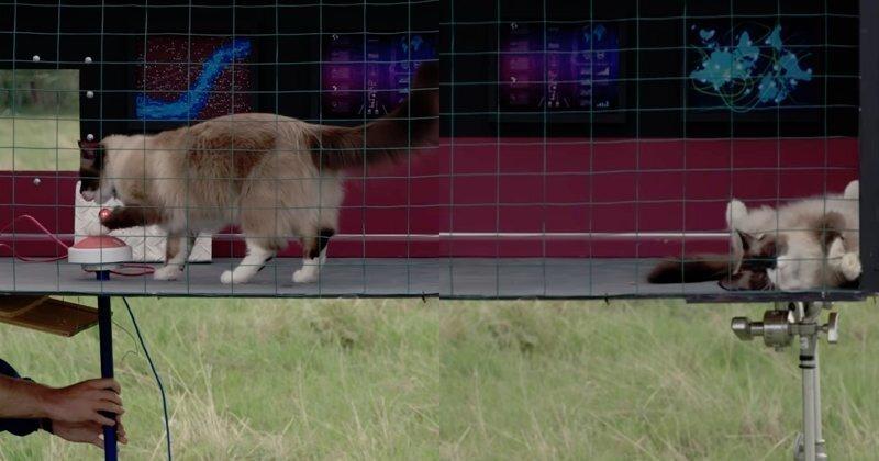 Канадец два месяца учил кота нажимать кнопку, но в нужный момент тот показал, кто хозяин положения