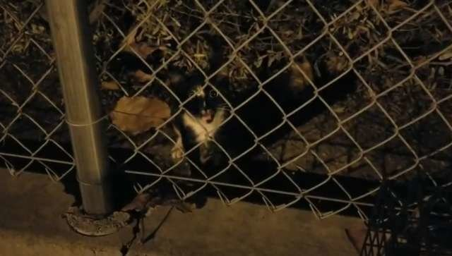 Начав подкармливать бездомную кошку на работе, мужчина уже не мог ее бросить
