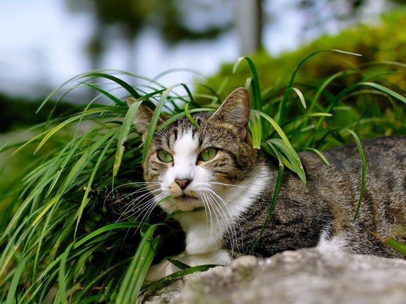 В Финляндии кот пережил атаку робота-газонокосилки