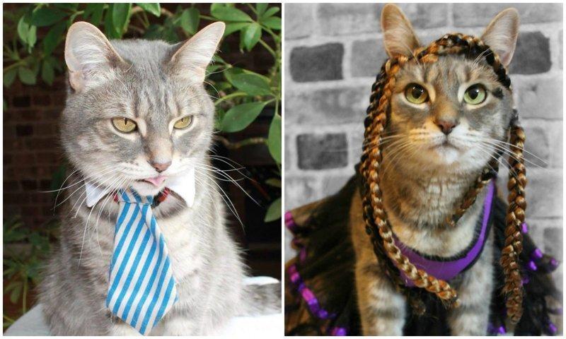 Этот кот обожает переодевания, и восхитителен в любых образах