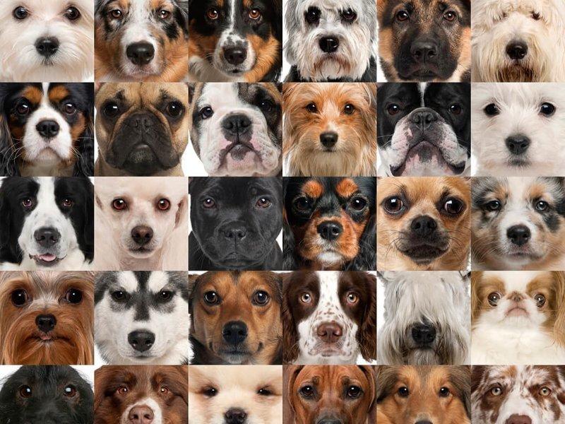 Породы собак от больших до маленьких