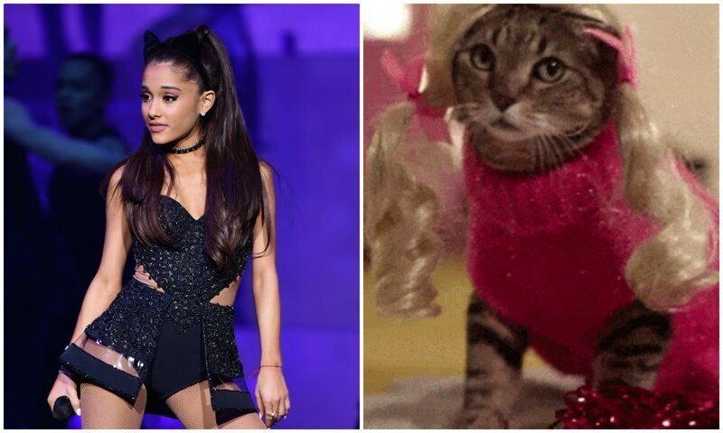 Фанаты сделали пародию на песню Арианы Гранде с участием котеек