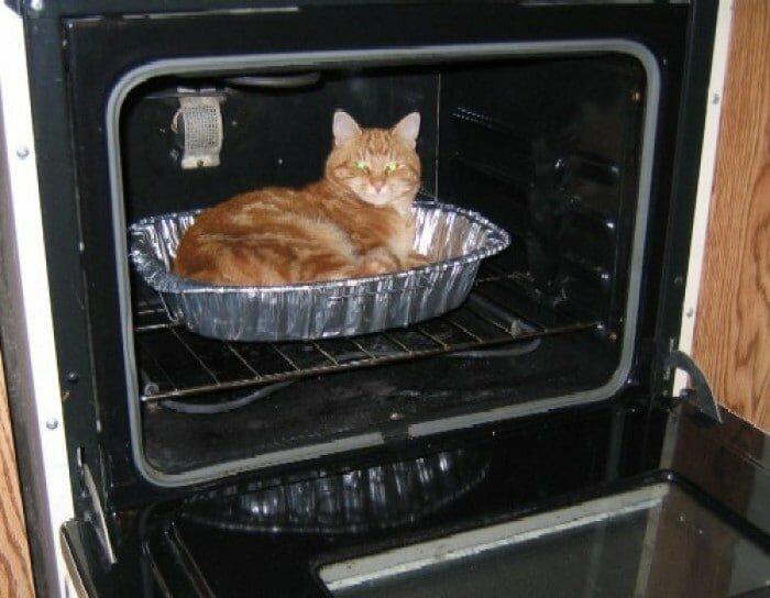 Котейки всегда найдут там, где тепло