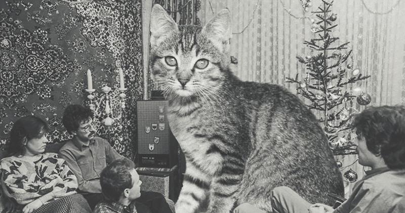 Советские новогодние ретро-кошки