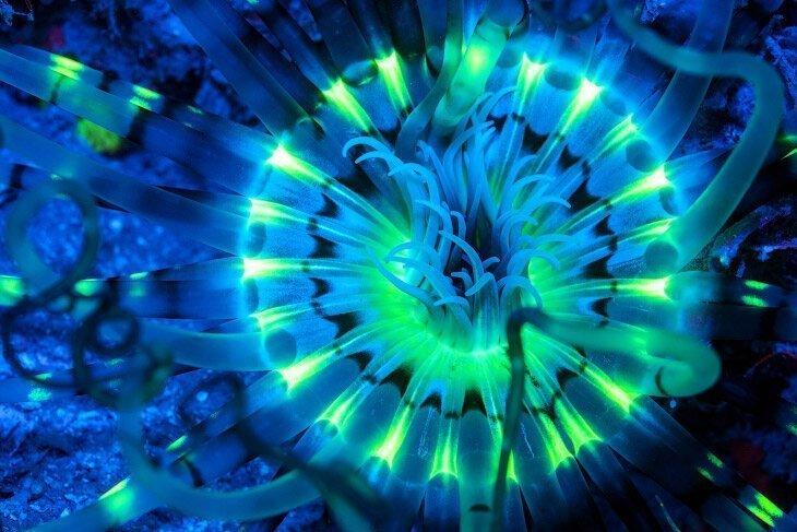 Отправляемся в настоящий Аватар. Светящиеся существа морей и океанов