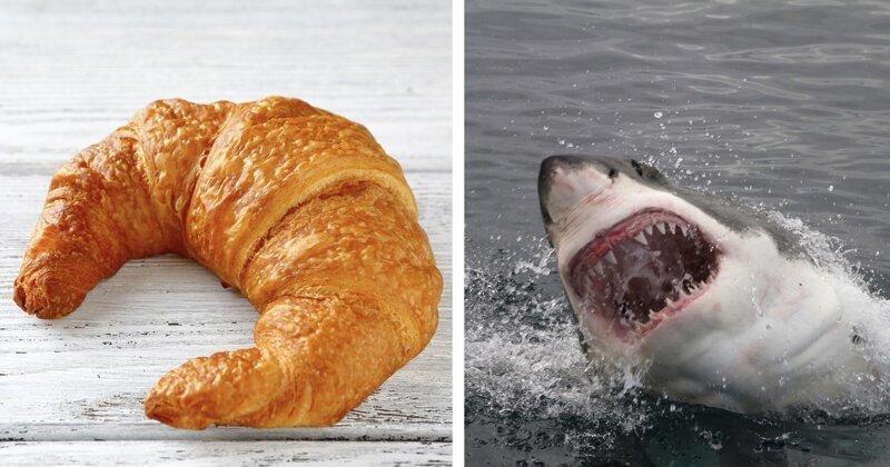 Комната страха, акулы, пуленепробиваемое стекло: безумные требования богатых туристов