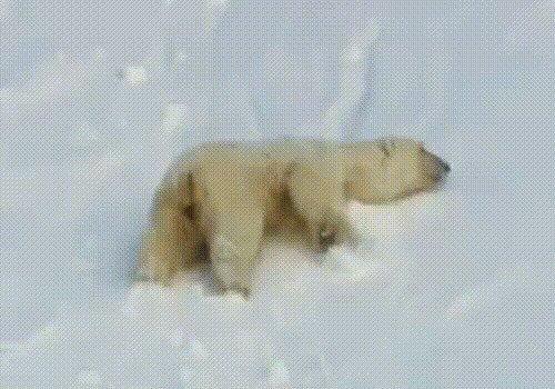 Гифки - Медведи (7 гиф)