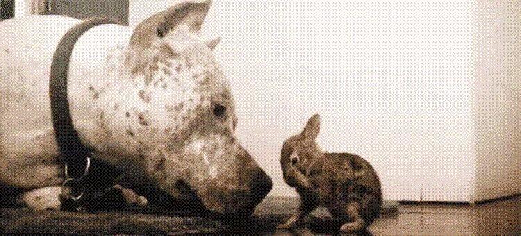Гифки - Собаки