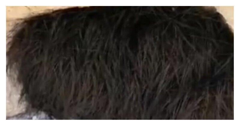 Фотограф решил потрогать бочок волосатого зверька, и лучше бы он это не делал!