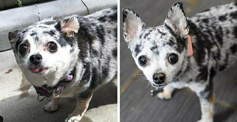 20 фотографий собак до и после того, как они взяли себя в лапы и смогли похудеть