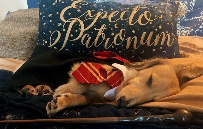 Самый симпатичный студент Хогвартса - пес по кличке Римус