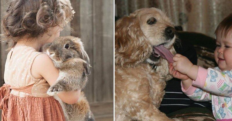 20 реакций домашних животных на детей в доме