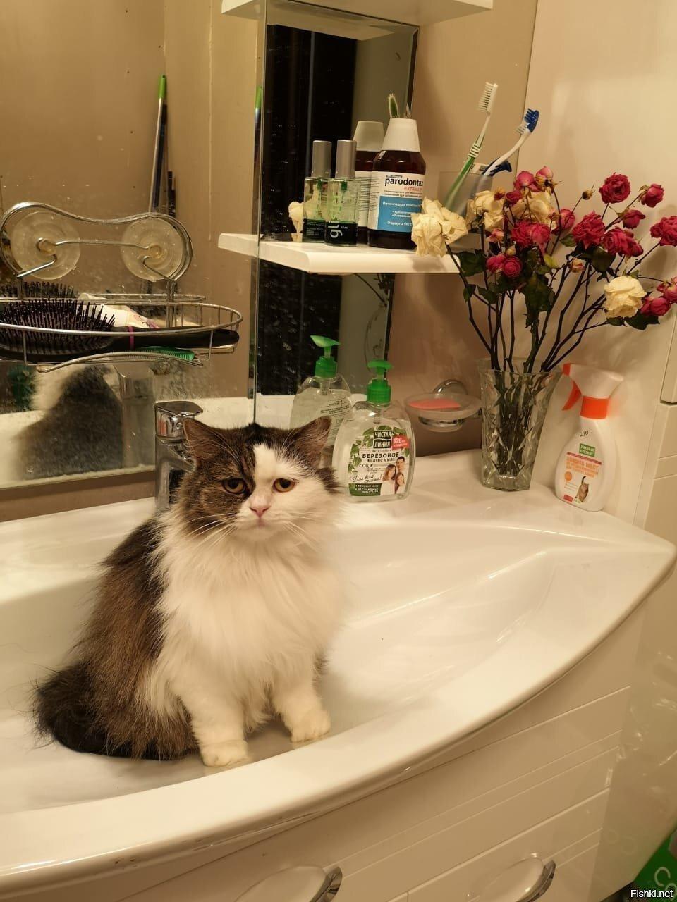 Пришел руки помыть