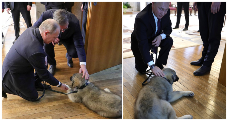 Президент Сербии подарил Путину щенка по имени Паша