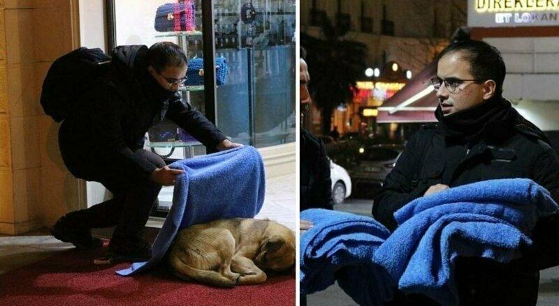 Спасение от стамбульских холодов: турецкий стоматолог укрывает бродячих животных пледами