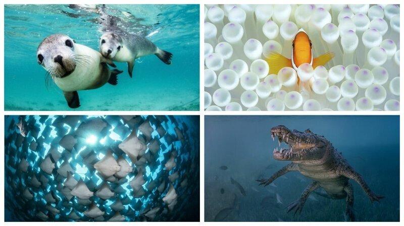 Победители конкурса подводной фотографии Ocean Art 2018