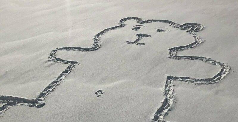 """Канадцы разгадывают тайну пупка монреальского """"снежного медведя"""""""
