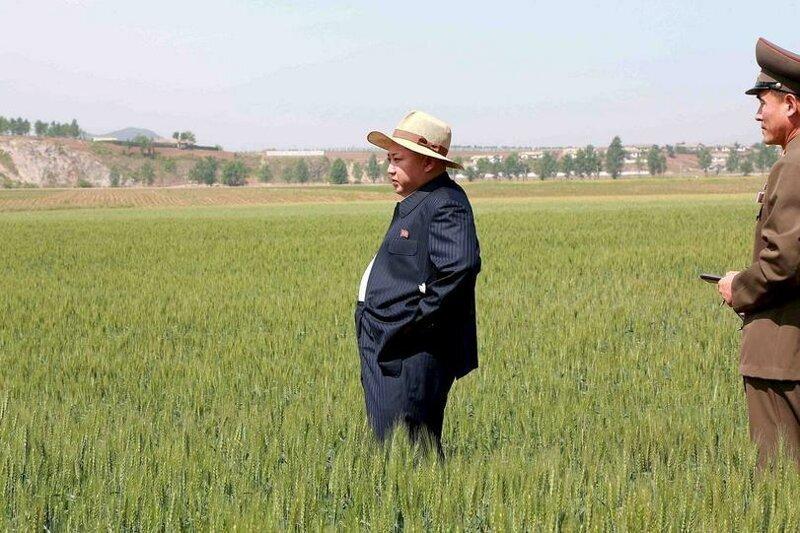 Северная Корея попросила у России 50 тысяч тонн бесплатной пшеницы
