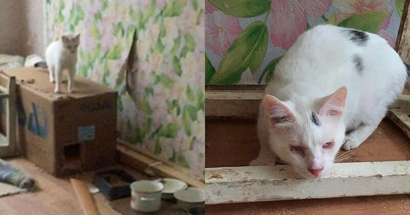 Запертые в питерской квартире коты устроили потоп
