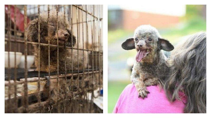 Защитники животных спасли собаку, которая всю жизнь просидела в темной клетке