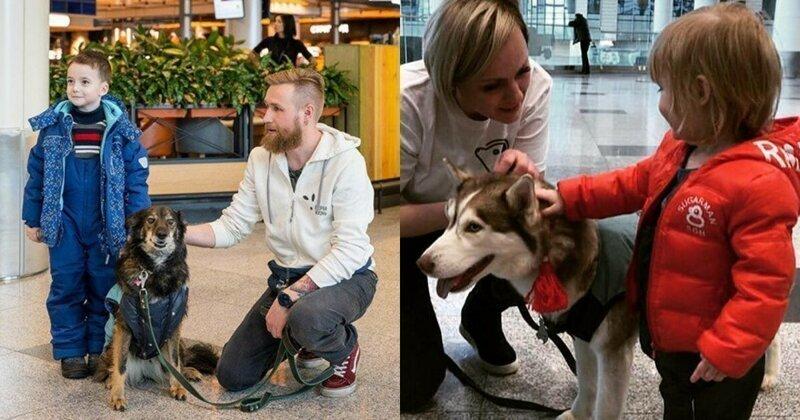В Домодедово собаки помогли пассажирам снять предполетный стресс