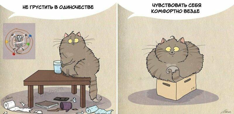 10 полезных вещей, которым людям стоит поучиться у котов