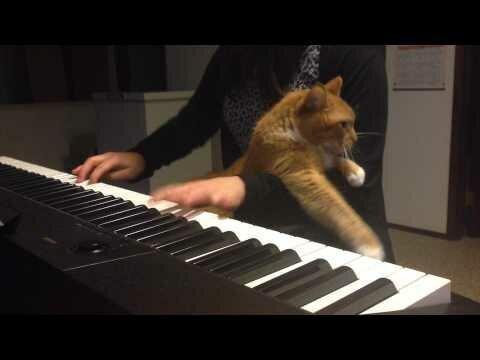 Ничто не остановит кота, если он решил, что пришло время для ласки