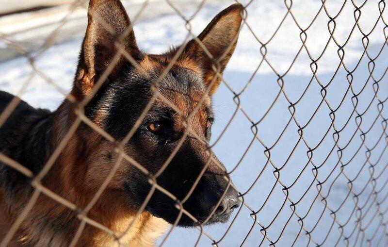 МВД подготовило проект перечня потенциально опасных собак