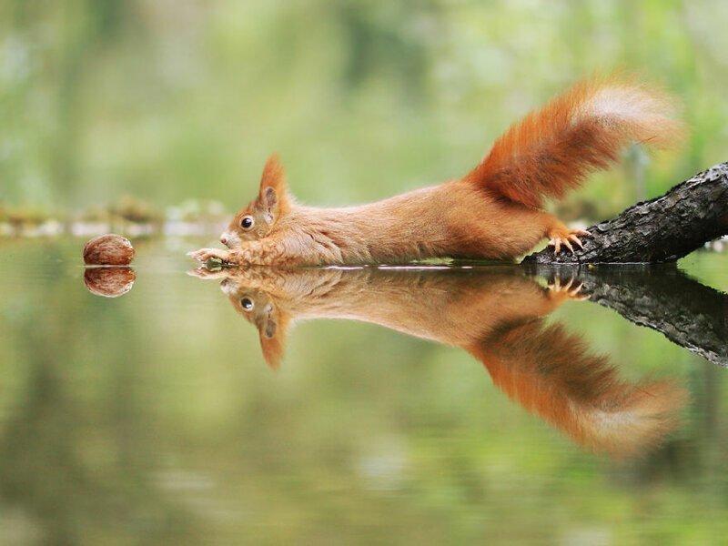 Австрийский фотограф  делает крутые снимки милых диких животных
