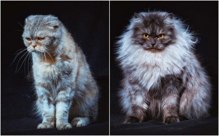 Бездомные уральские коты стали фотомоделями, чтобы найти новых хозяев