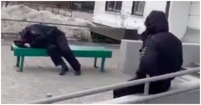 Заработались: В Подмосковье сняли на видео заснувших на улице пьяных полицейских