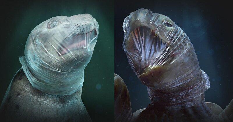 Общество охраны морской фауны показало животных, задыхающихся в пластике
