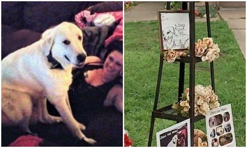 Геройский пес погиб, защищая хозяев во время стрельбы