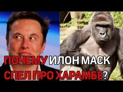 """""""Покойся с миром, Харамбе!"""" - Илон Маск запел рэп в честь убитой гориллы"""