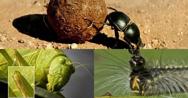 10 невероятных фактов о насекомых