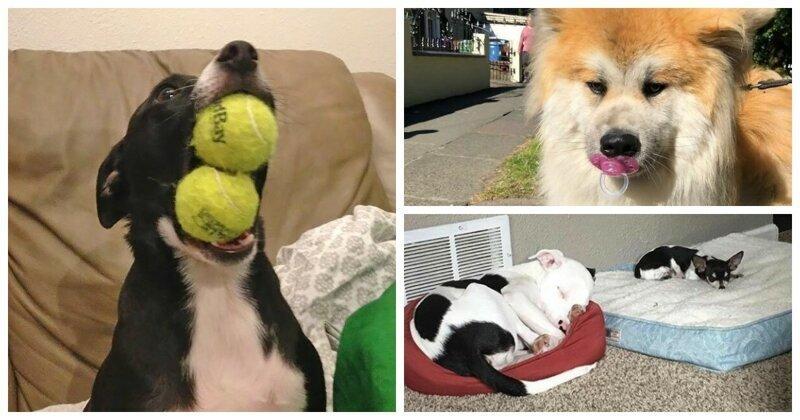 55 забавных собак со странностями в поведении