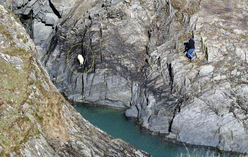 Британец, рискуя своей жизнью, спас овцу, застрявшую на скале