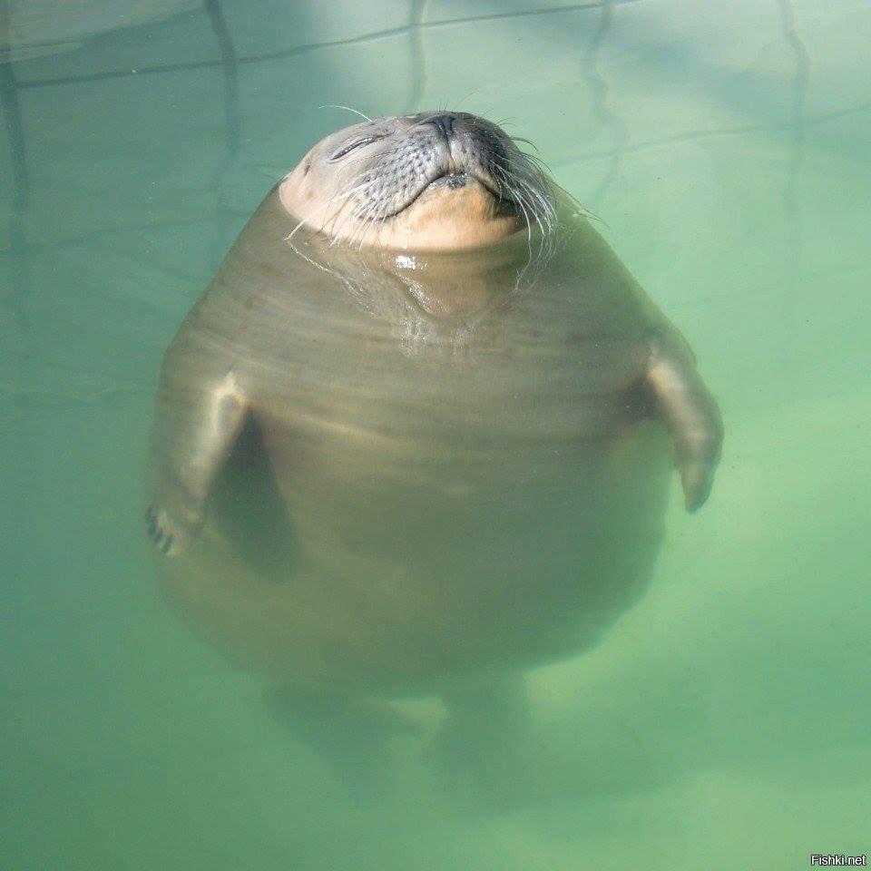 Как я буду выглядеть, когда начнется купальный сезон