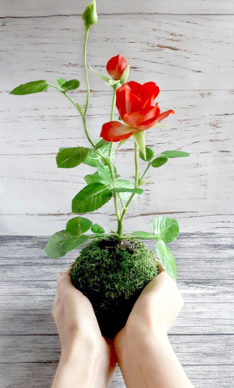 Кокедама с розой из холодного фарфора