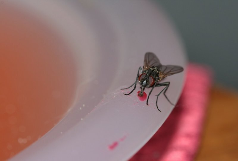 Почему мух привлекают плохие запахи?