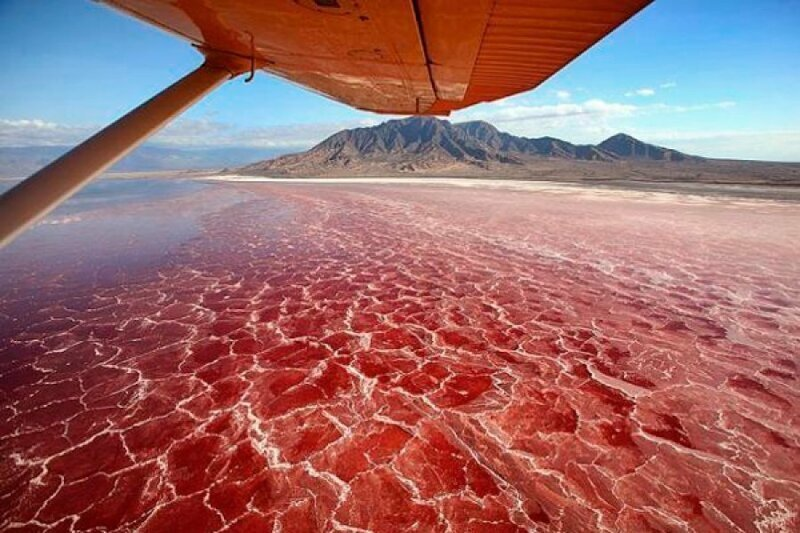 Озеро Натрон в Танзании. Пугающее, но удивительное