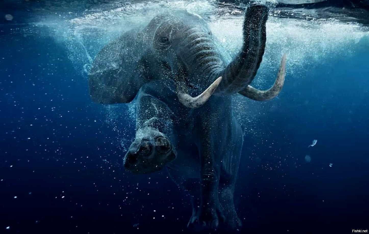 Слон-подводник