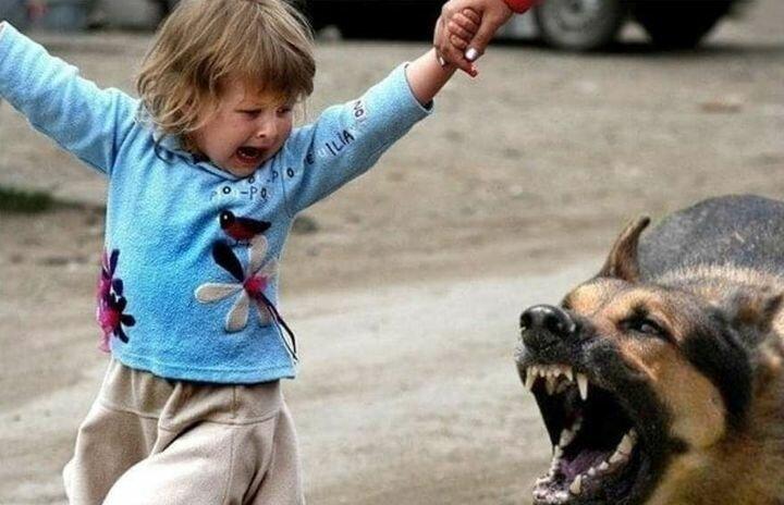 Eсли на вас напала собака