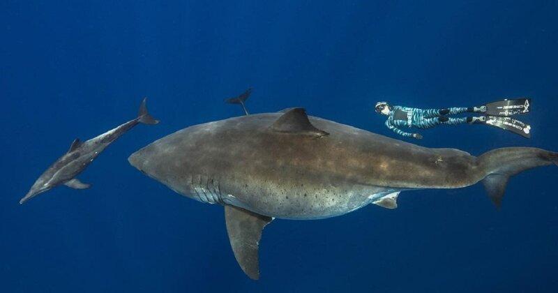 """""""Танцы с акулами"""": подводные фотосессии Хуана Олифанта"""